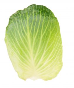 Image of Cabbage & Cilantro Slaw, Recipe Key