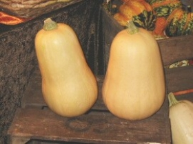 Sweet Butternut Squash