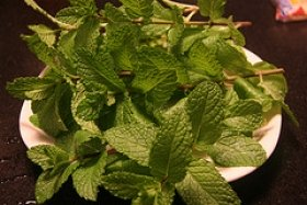 Fresh Garden Mint Ice Cream